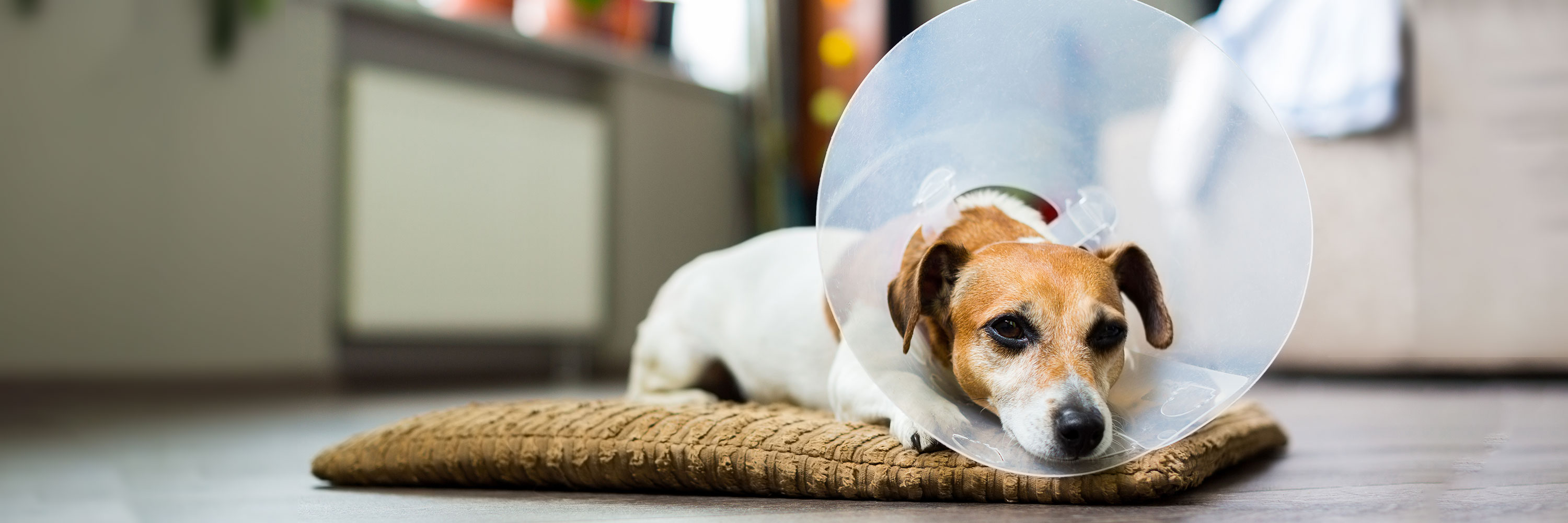 Tips on Caring for Your Pet after Surgery
